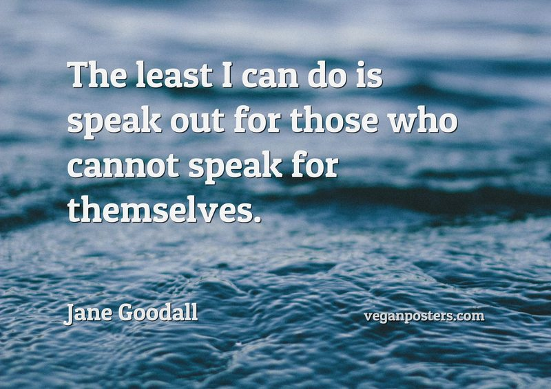 The least I can do is speak out for those who cannot speak for themselves.