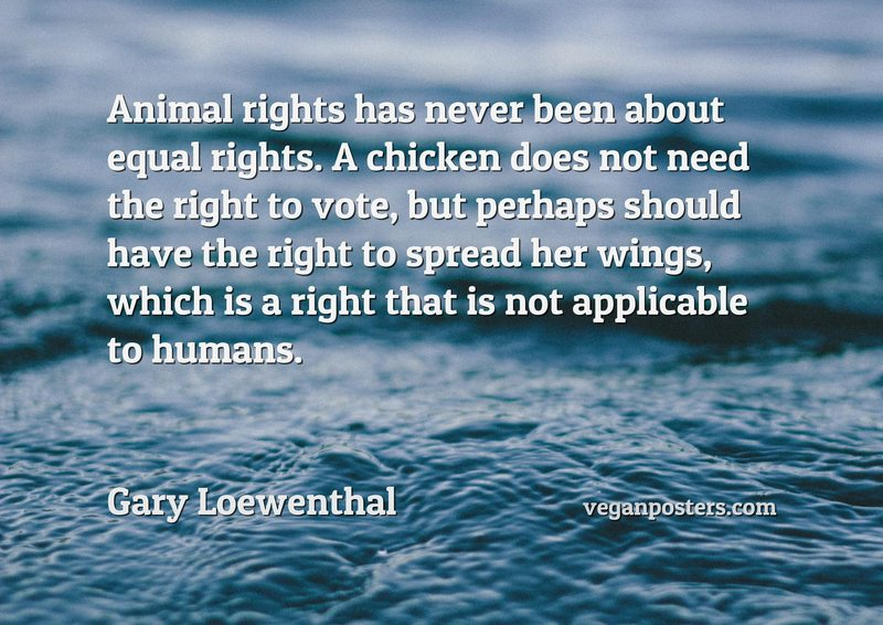 Animal rights has never been about equal rights. A chicken does not need the right to vote, but perhaps should have the right to spread her wings, which is a right that is not applicable to humans.