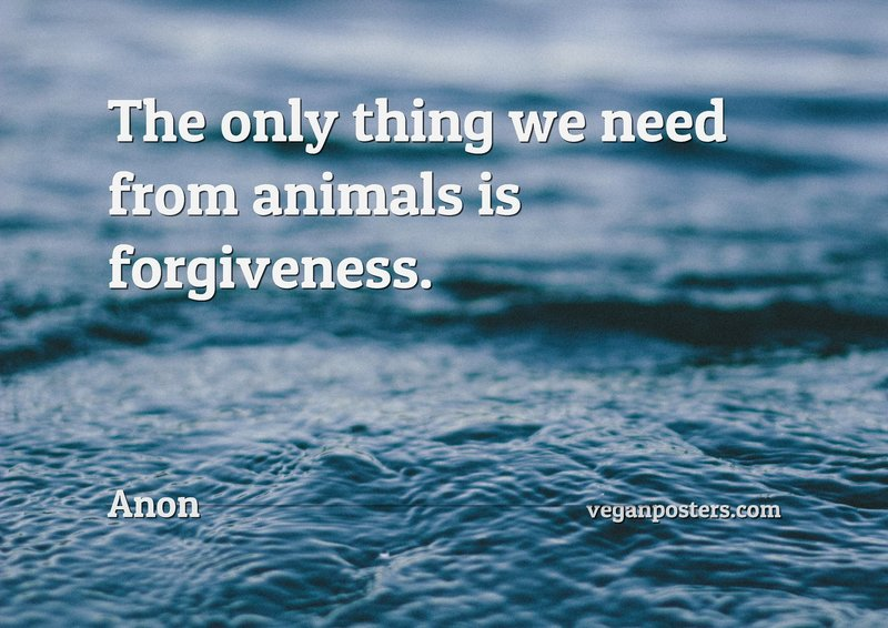 The only thing we need from animals is forgiveness.