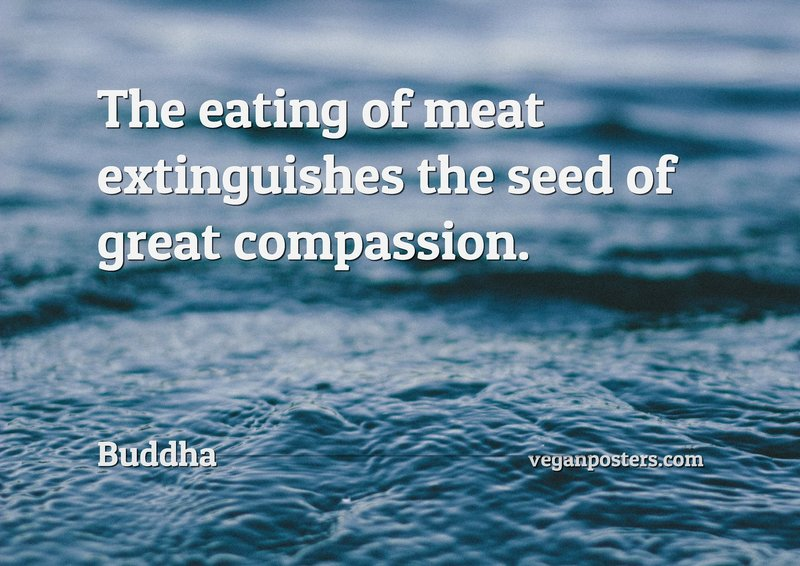 The eating of meat extinguishes the seed of great compassion.