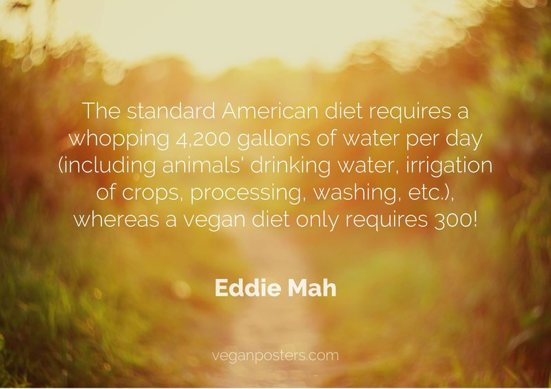 The standard American diet requires a whopping 4,200 gallons of water per day (including animals' drinking water, irrigation of crops, processing, washing, etc.), whereas a vegan diet only requires 300!