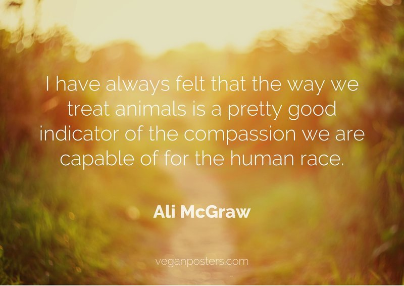 I have always felt that the way we treat animals is a pretty good indicator of the compassion we are capable of for the human race.
